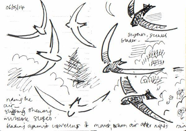 {id} swifts -  ink pen -  A6 sketchbook