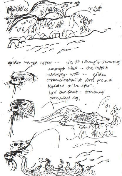 otter - shetland - ink pen - A4 sketchbook