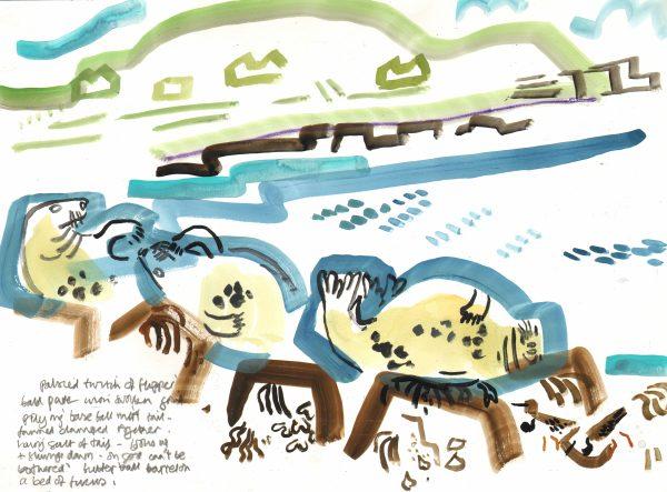 seals & turnstones - bardsey island -