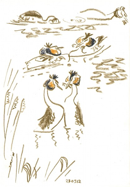 6427 -great crested grebes dlisplaying - wax crayon - c.A2