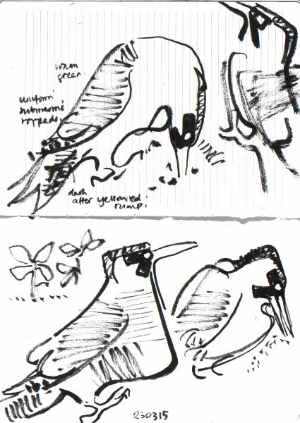 6637 -green woodpecker feeding on allotment - brush pen - A4 sketchbook