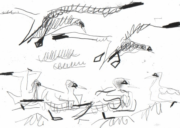 6667 -flying gannet studies - graphite - 21 x 29.7cms (A4)