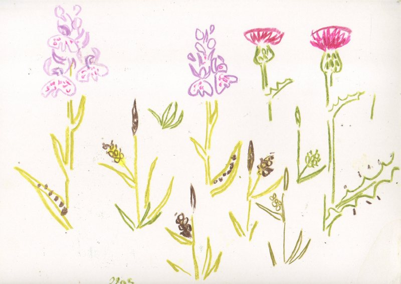 heath spotted orchid, meadow thistle, sedge - powerstock common - wax crayon - 29.7 x 42 cms (A3)