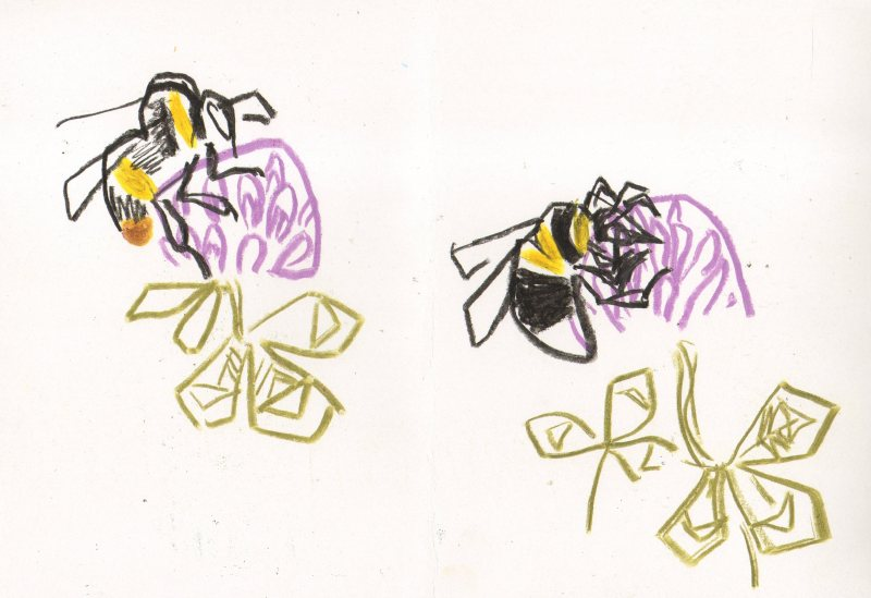 6857early and garden bumblebees on clover - kingcombe - wax crayon - 29.7 x 42 cms (A3)