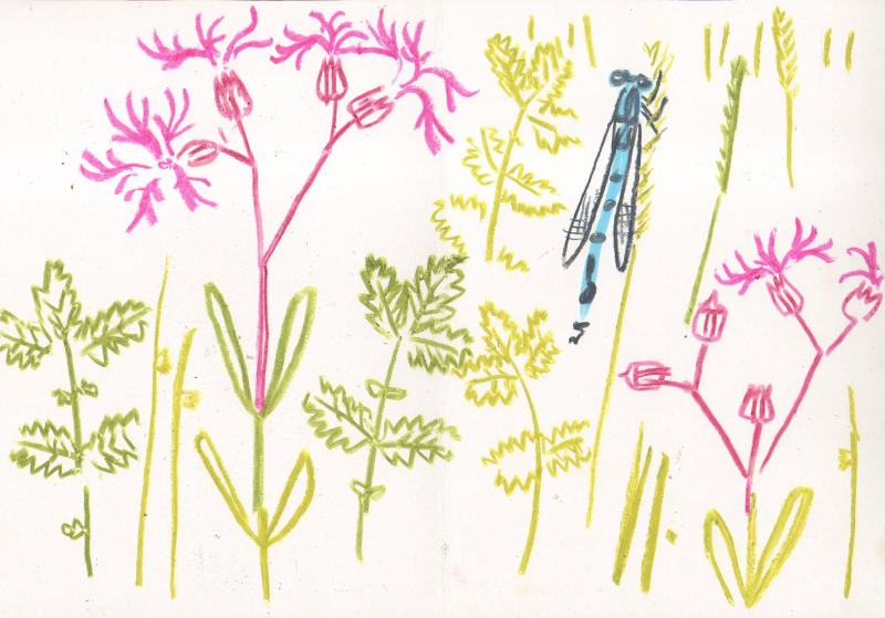 ragged robin, blue damselfly - kingcombe - wax crayon - 29.7 x 42 cms (A3)