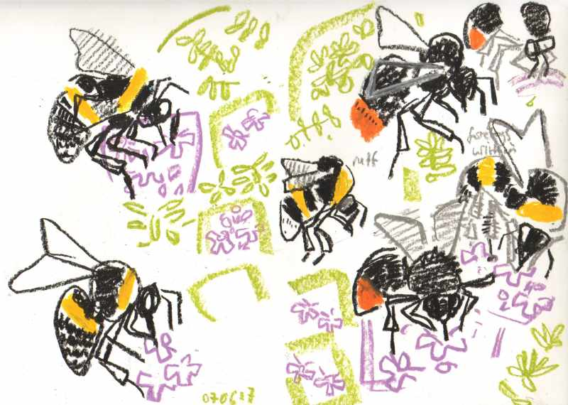buff & red tailed bumblebees on thyme - allotment bristol - wax crayon - 29.7 x 42 cms (A3)