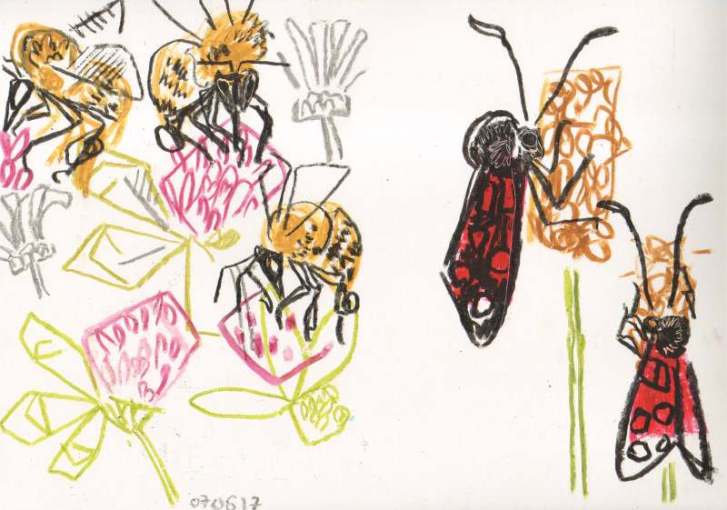 common carder bumble on clover , 6 spot burnet on plantain - allotment bristol - wax crayon - 29.7 x 42 cms (A3)