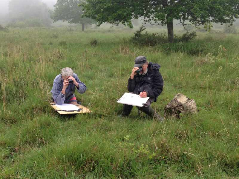 Bob Greenhalf & Matt Underwood sketching marsh fritillary -