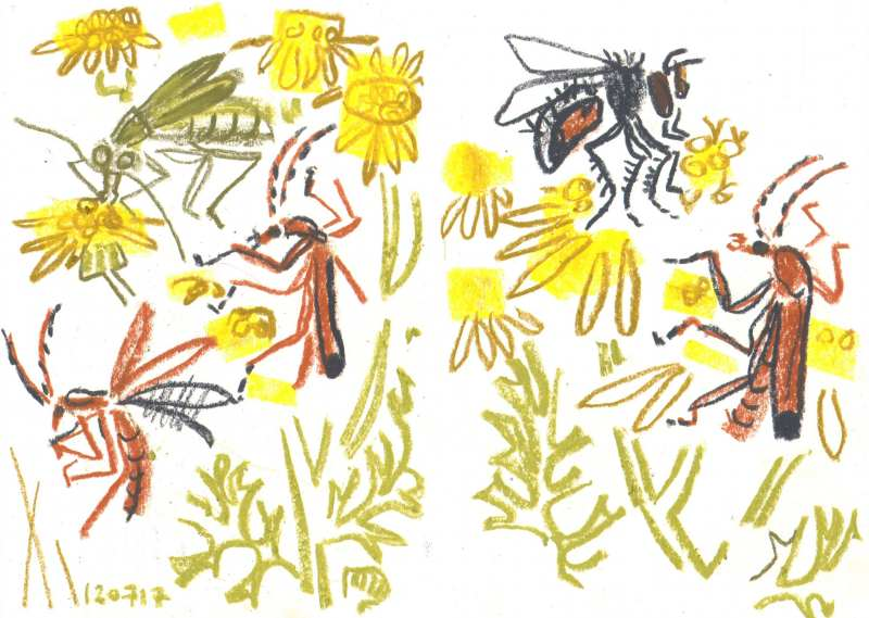 soldier beetles, flower beetle and fly on ragwort - allotment bristol - wax crayon - c. A3