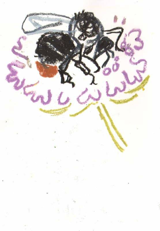 red-tailed bumblebee on small scabious - allotment bristol - wax crayon - c. A4