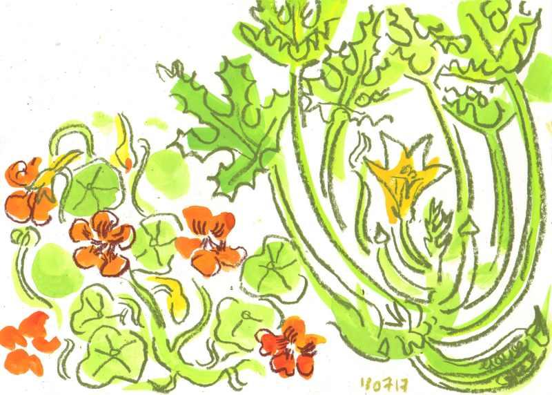 nasturtium & courgette - allotment bristol - gouache & wax crayon -  c. A3
