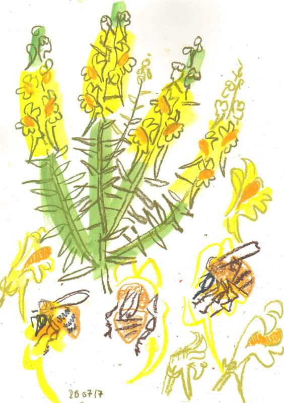 7002common carder bumblebee & toadflax - allotment bristol - gouache & wax crayon -  c. A3