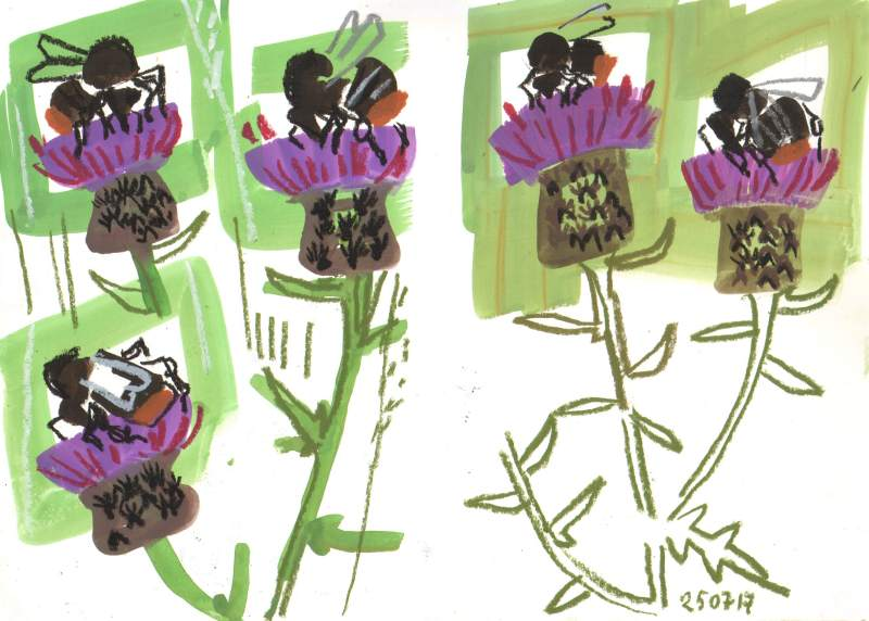 red-tailed bumblebees on knapweed - allotment bristol - gouache & wax crayon -  c. A3