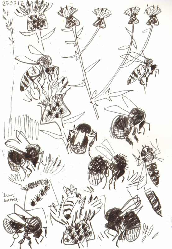 bees & hoverflies on knapweed - allotment bristol - ink pen -  c. A4