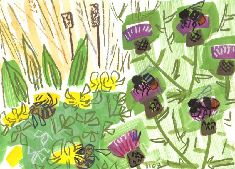 red-tailed bumbles on knapweed, carders on trefoil - allotment bristol - gouache & wax crayon -  c. A3