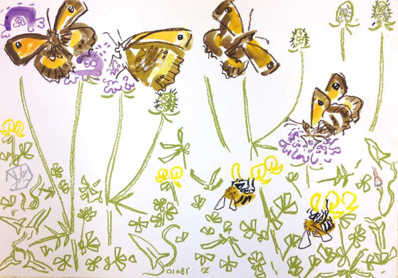 7035gatekeepers on scabious, common carder on trefoil - allotment bristol - gouache & wax crayon - c.A2