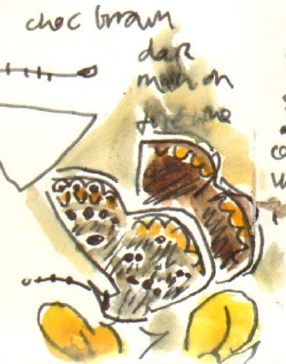brown argus - allotment bristol - watercolour & ink pen -  A6 sketchbook