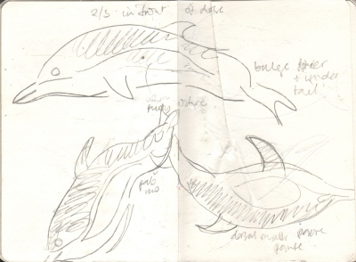7075dead common dolphin - pembrokeshire - graphite - A6 sketchbook