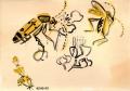 168‐4174<b>longhorn beetle, bramble & ladies bedstraw</b>gouacheA4 (21 x 29.7cms)&#8208;Greg&nbsp;Poole
