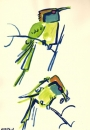 102‐5704 <b>little green bee-eater</b>  gouache 42 x 29.7 cms (A3) £70‐Greg Poole