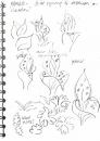 101‐6254 <b>common spotted orchid, basal leaf studies</b> garden, bristol  21 x 14.5 cms (A5) not for sale&#8208;Greg&nbsp;Poole