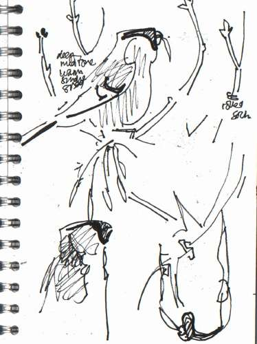 <b>bullfinch feeding on ash keys</b>      permanent marker   A5 sketchbook   &#8208;Greg&nbsp;Poole