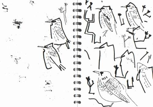 <b>fieldfare & starlings in oak</b>      permanent marker   A5 sketchbook   &#8208;Greg&nbsp;Poole