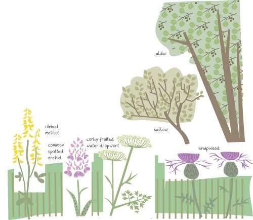 Swanwick meadow flora