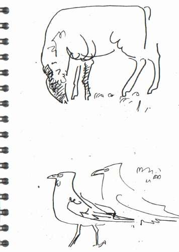 bl-007  <b>crows & sheep</b>  mendips   ink pen  A5 sketchbook  &#8208;Greg&nbsp;Poole