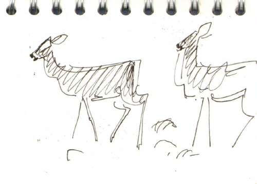 bl-015  <b>roe deer</b> mendips   ink pen  A6 sketchbook  &#8208;Greg&nbsp;Poole