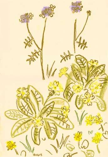 101&#8208;6293&emsp;<b>primrose, cuckoo flower & celandine</b>&emsp;&emsp;&emsp;&emsp;&#8208;Greg&nbsp;Poole