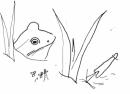 frog‐GregPoole