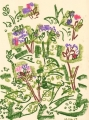 101‐6260<b>pulmonaria</b>garden, bristoloil pastel36 x 28 cms&#8208;Greg&nbsp;Poole