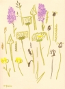 175‐6175 <b>common-spotted orchid, ox-eye daisy, goatsbeard</b> mendips wax crayon 38 x 28 cms £120&#8208;Greg&nbsp;Poole