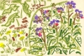 101‐6261<b>pulmonaria</b>garden, bristoloil pastel38 x 56 cms‐GregPoole