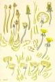 dandelions, daisies & plantain‐GregPoole