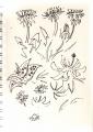 common-spotted orchid, dandelion, plantain‐GregPoole