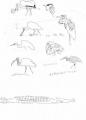 139‐4573<b>crocodile, ibis, egrets, heron, spoonbill & stork</b>A3£50‐GregPoole