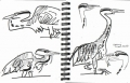 185‐6342 <b>grey heron</b>  permanent marker A5 sketchbook ‐Greg Poole