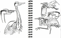 101‐6354 <b>grey heron</b> bristol reservoirs permanent marker A5 sketchbook ‐Greg Poole