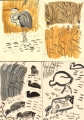 waterfowl‐GregPoole