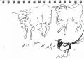 bl-0005  <b>sheep & magpie</b>       &#8208;Greg&nbsp;Poole