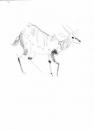 110‐4689<b>bushbuck</b>A3‐GregPoole