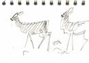 bl-015  <b>roe deer</b> mendips  ink pen  A6 sketchbook &#8208;Greg&nbsp;Poole
