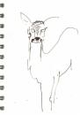 bl-002  <b>roe deer</b>  mendips  ink pen  A6 sketchbook &#8208;Greg&nbsp;Poole