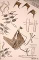 80‐5535<b>wren's nest</b>36 x 24 cms£80&#8208;Greg&nbsp;Poole