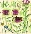 181‐6236<b>burnet moth, damselfly, marsh thistle & betony</b>bristol reservoirsgouache28 x 25 cms£90‐GregPoole