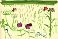 181‐6243 <b>burnet moths, damselflies, hogweed, betony & marsh thistle</b> bristol reservoirs gouache 38 x 56 cms £160&#8208;Greg&nbsp;Poole