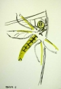 76‐4133 <b>black-tailed skimmer being eaten by spider</b>   A3 (42 x 29.7 cms) £POA‐Greg Poole