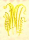 225‐7167<b>ferns</b>‐GregPoole